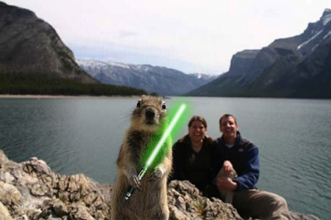 Squirrel with lightsaber