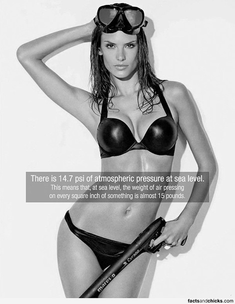 factsandchicks.com