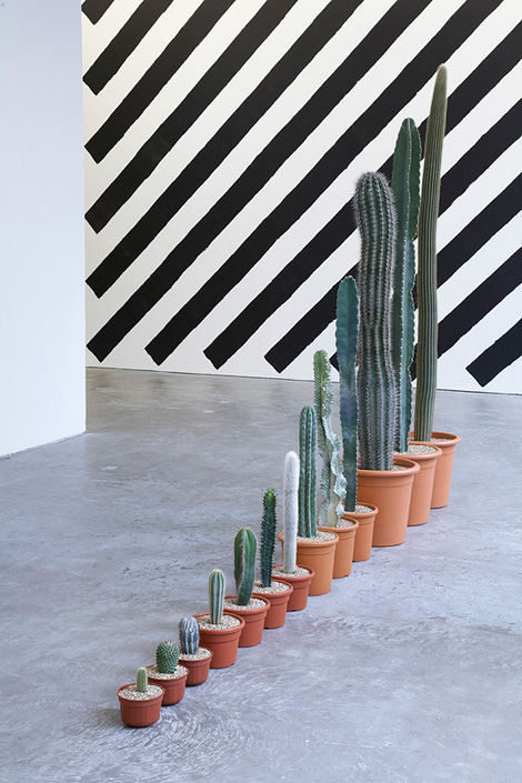 Martin Creed: Cacti