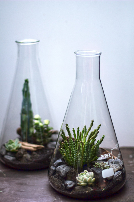 Lab-ware as terrarium
