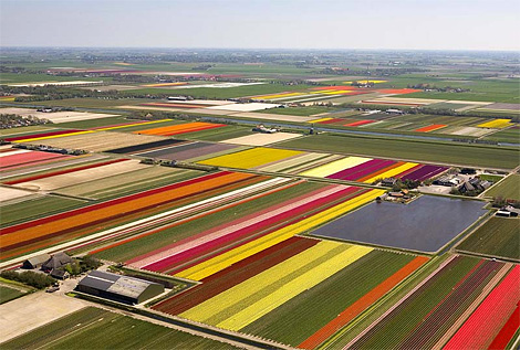 Tulip season, Holland