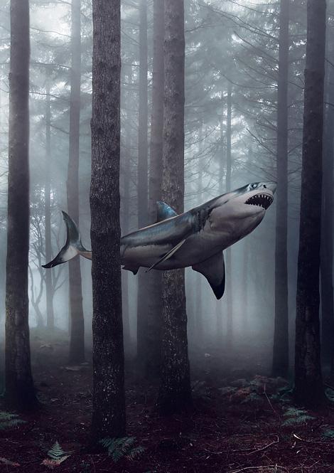 Shark NOIR