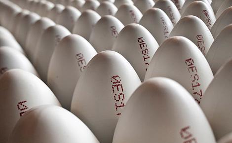 Code Egg