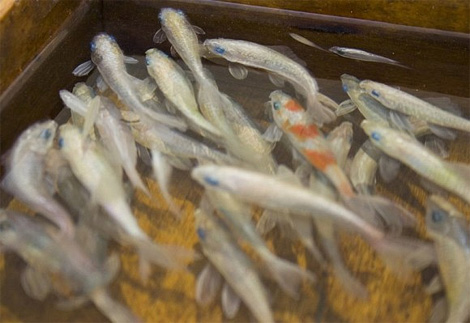 Riusuke Fukahori: Goldfish Salvation