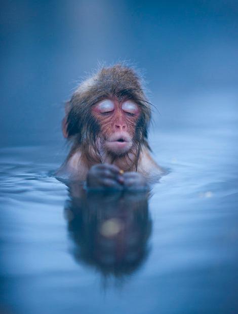 Bliss monkey