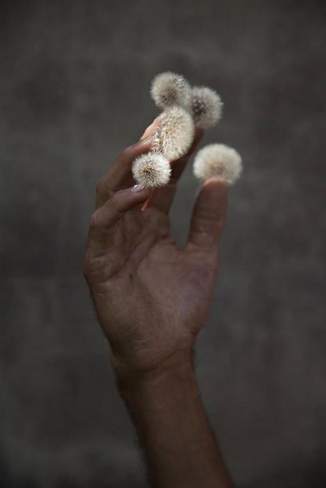 Elspeth Diederix: Hand