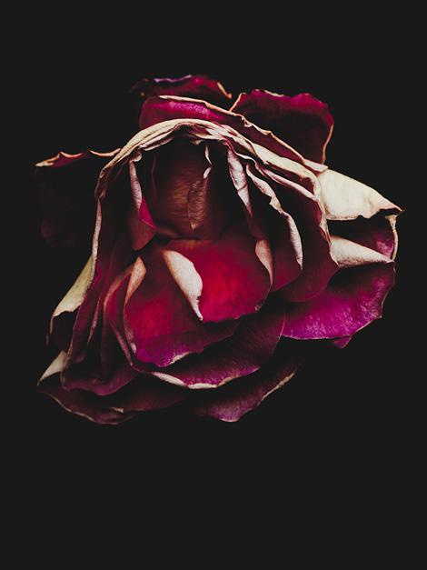 Billy Kidd: Decaying Rose