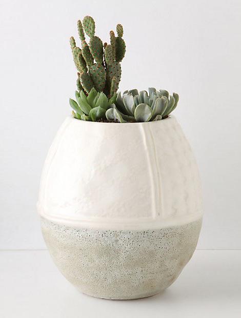 Cactus in vase