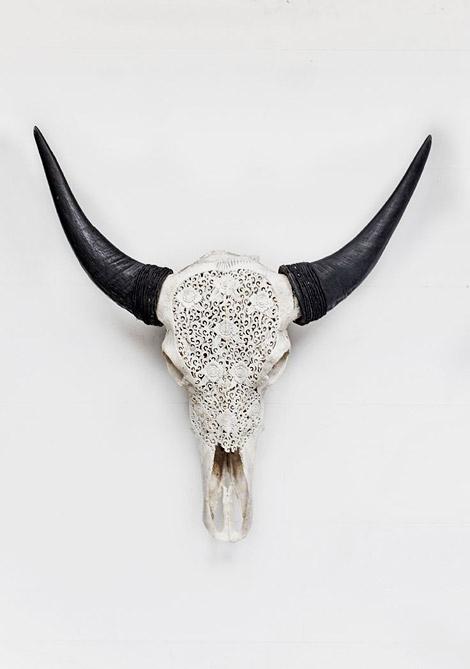 Lace Longhorns