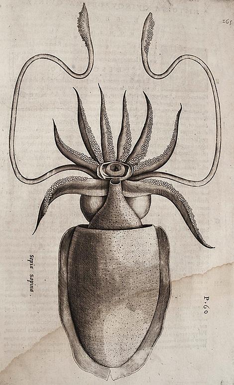Hippolito Salviani