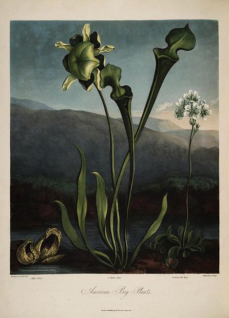 American Bog Plants