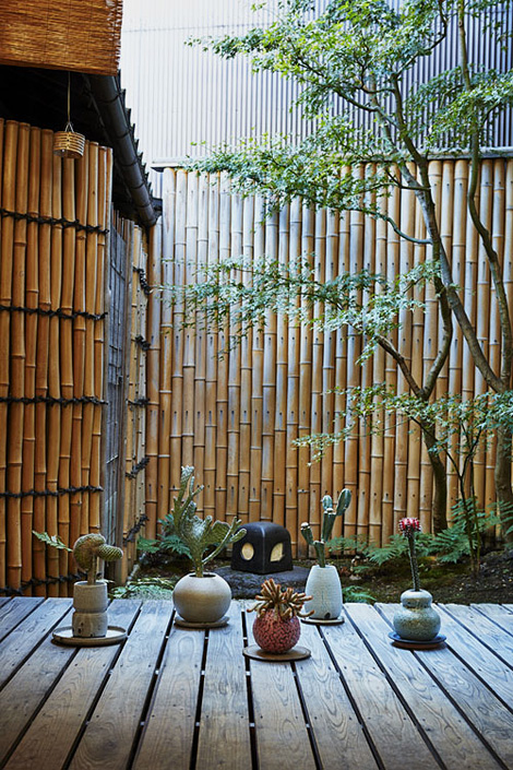 Kyoto plants and pots