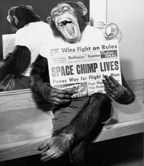 Space chimp lives