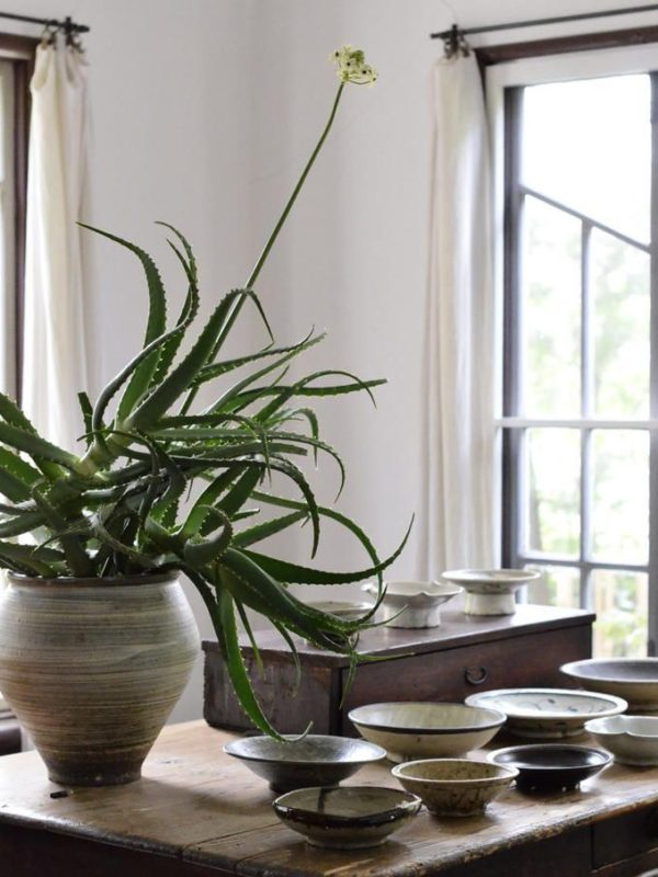 Aloe vera with bowls