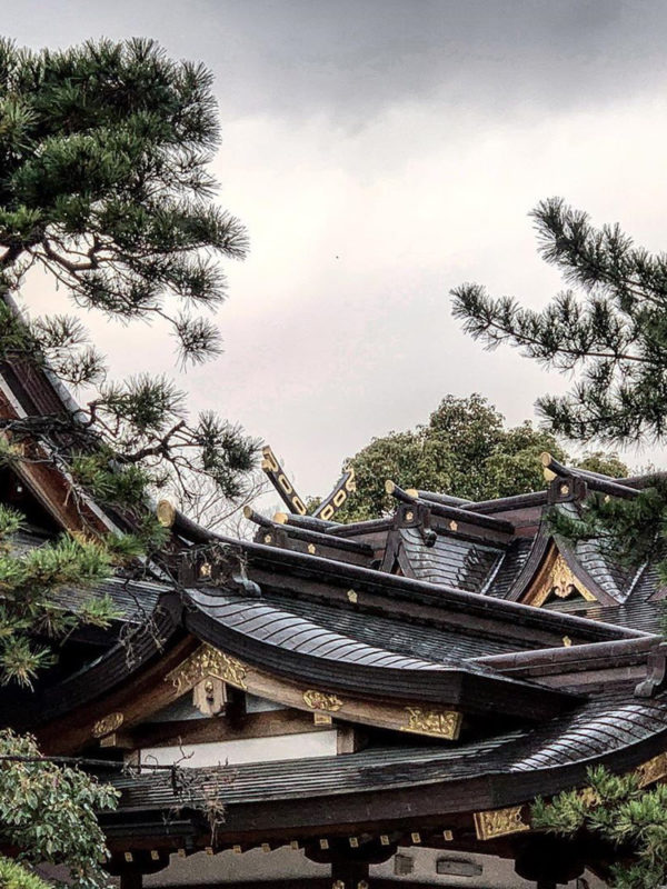 Rooftops and pines