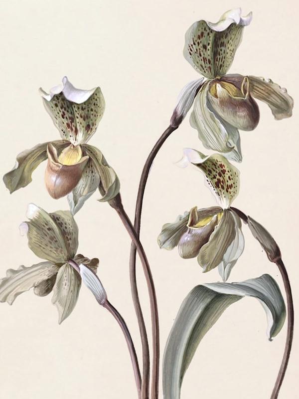 Orchid Studies x Wegmayr Sebastian
