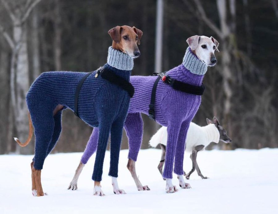 Posh Pooches