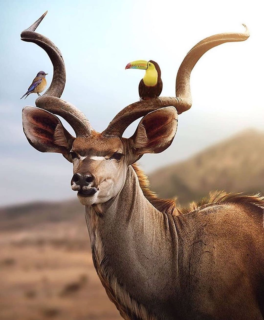 Kudu and friends