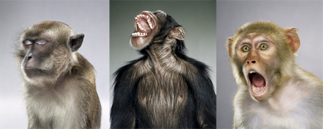 Jill Greenberg Monkeys