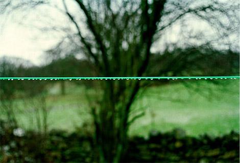 Lines - Maria Moore